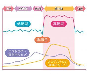基礎体温表 基礎体温 女性ホルモン