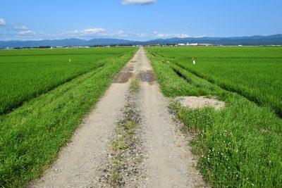田んぼの農道