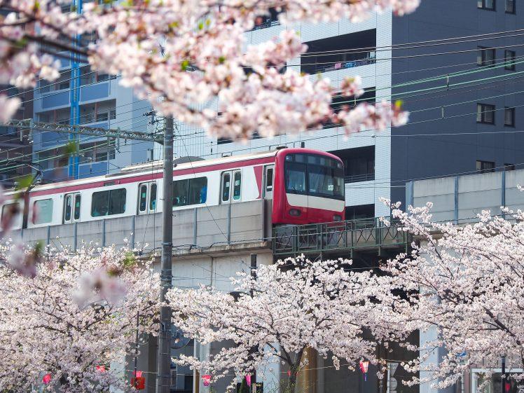 大岡川沿いの桜 曙町がある黄金町駅付近